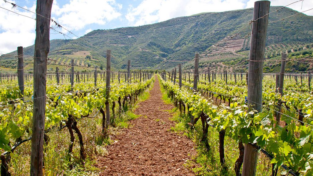 cretan winery